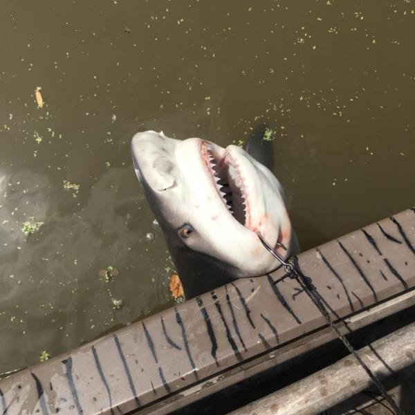 Shark_1532310662374.jpg